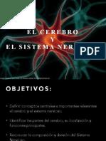 El Cerebro y Sist Nervioso Psic 1052 INTER