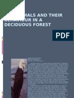 deciduousforest_animals
