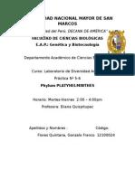 phylum platyhelmithes.docx