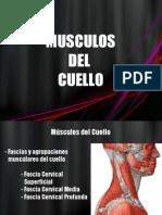 Músculos Cuello, Torax y Abdomen