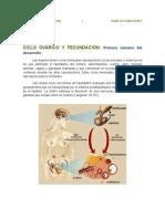Ciclo Ovarico y Fecundacion