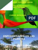 Enfermedades en Las Plantas