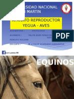 Aparato Reproductor de Yegua y Aves Autoguardado
