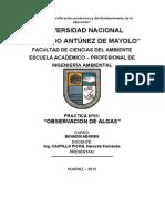INFORME 1- OBSERVACION DE ALGAS