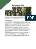 Bosques en Chile