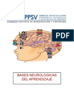 Bases Neurologicas Del Aprendizaje Johana Rangel