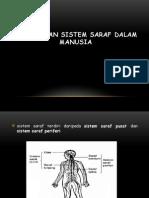 3.2 Peranan Sistem Saraf Dalam Manusia