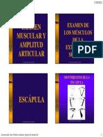 Pruebas Funcionales Musculares de Extremidades Superiores Examen Muscular y Amplitud Articular