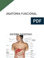Anatomia Funcional Sistemas