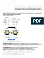 indentifica carbohidratos