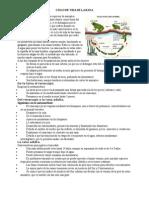 CICLO DE VIDA DE LA RANA.docx