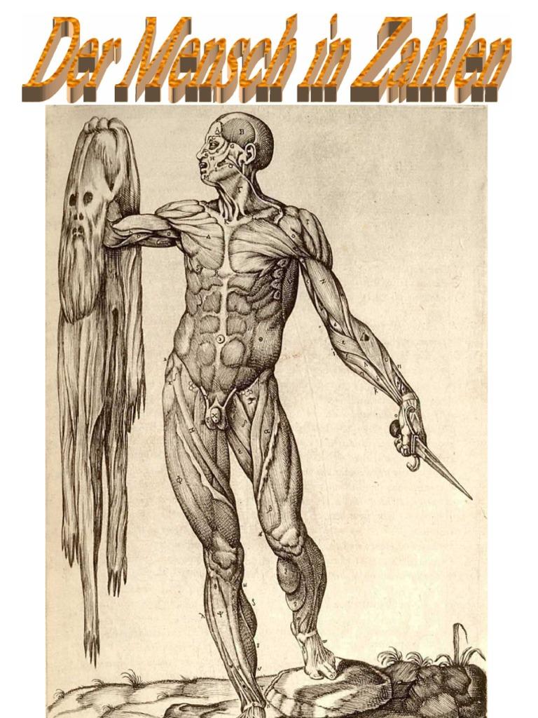 Der Mensch in Zahlen