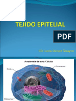 TEJIDO EPITELIAL 1