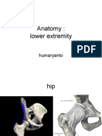 lower extremity.ppt