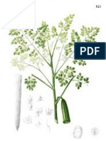 Growth and yield of Moringa oleifera as influenced by spacing and organic manures in South-Western Nigeria