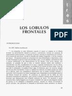 Los Lobulos Frontales, Tres