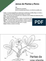 Partes Basicas de Plantas y Flores