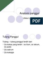 anatomi panggul.pdf