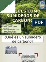Bosques Como Sumideros de Carbono