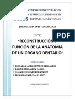 Reconstruccion y Funcion de La Anatomia de Un Organo Dentario