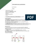 RECONOCIMIENTO DE LAS PROTEÍNAS.docx