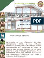 Exposicion de Pato Sobre Metritis