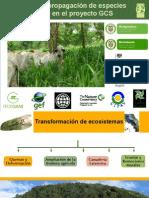 Selección y Propagación de Especies Arbóreas en El Proyecto GCS - Juan Carlos Gomez