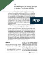 Ciclo Reproductor e Histología de Las Gónadas de Tilapia Oreochromis Niloticus Perciformes Cichlidae