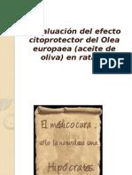 Trabajo Final-Aceite de Oliva