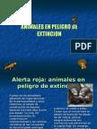 ANIMALES EN PELIGRO DE EXTINCION final