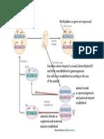 Genomic Imprinting.pdf