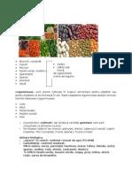 Curs legumele.docx