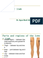 The Lower Limb