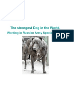 The strongest Dog in the World
