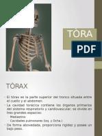 (V) Torax