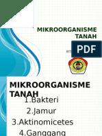 MIKROORGANISME TANAH