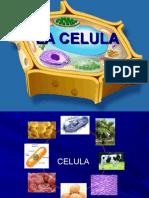 Biologia CelulaEd.