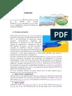 EL RELIEVE DEL MAR PERUANO.docx