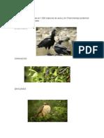 flora y Fauna Chanchamayo - peru