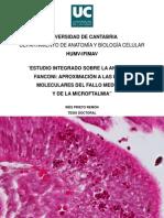estudio anemia de fanconi