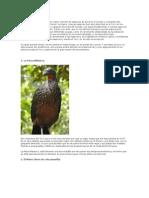 Especies Endemicas Del Perú Trabajo Escrito