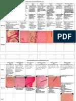 Praktikum Patologi Anatomi