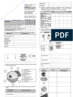 actividadessobreestructuracelular1-120318122717-phpapp02