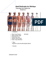 Seminario de Anatomia I