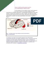 Áreas Corticais de Associação e as Assembleias neuronais