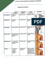 Apostila de Estudo de Músculos Dos Membros Superiores e Inferiores