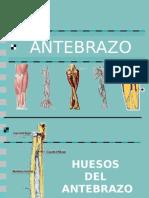 Ante Brazo