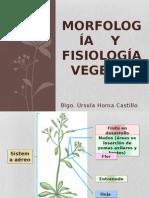 Morfología y Fisiología Vegetal