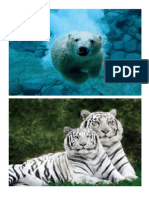Animales útiles al humano, nocivos y animales en peligro de extincion