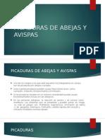 Picaduras de Abejas y Avispas